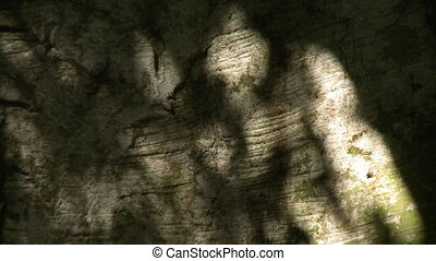 Shadows of trees dancing on a rock wall - Abstract shadows...