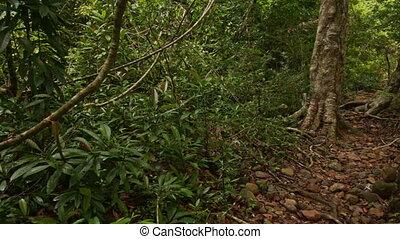 Shady Narrow Path in Thick Tropical Park - closeup shady...