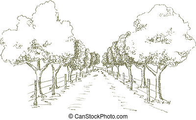 Shady Road - Pen and ink style illustration of a tree shaded...
