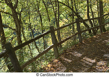 Shady Trail with Fence