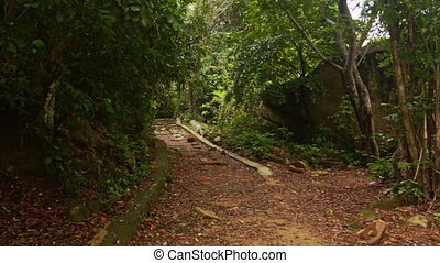 Shady Walkway in Thick Tropical Park - shady ground rocky...