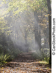 Shafts of Light on Foggy Trail