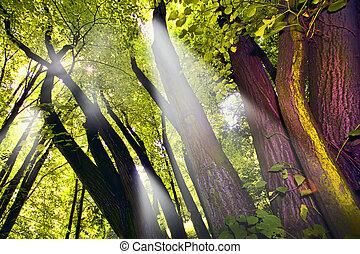 Shafts of lights piercing through dense canopy