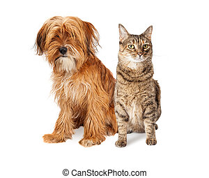 Cute mixed breed dog with long shaggy hair sitting next to a pretty tabby cat. Isolated on white.