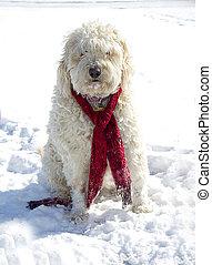 Shaggy Dog in Snow