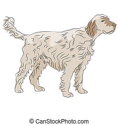 Shaggy Haired Dog - An image of shaggy haired dog.