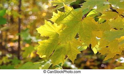 shakes  leaves