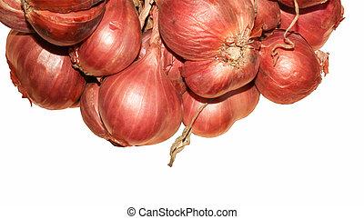 Shallot onions on white background