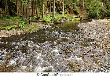 Shallow river with stones