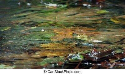 Shallow Woodland Pool In Rainfall - Macro shot of shallow...