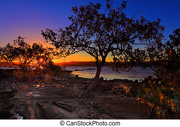 shallows, maré, mangrove, pôr do sol, baixo, intertidal