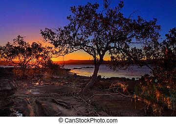 shallows, marea, mangle, ocaso, bajo, intertidal