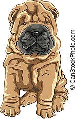 shar, schattig, glimlachen, dog, vector, pei, puppy, rood