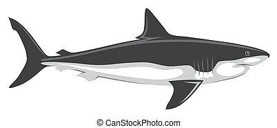 Shark - Abstract vector illustration of shark