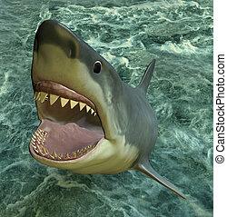 shark attack - 3d