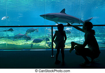 Shark Bay in Sea World Gold Coast Queensland Australia