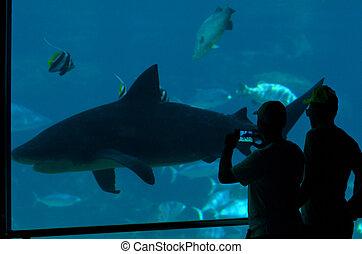 Shark Bay in Sea World Gold Coast Queensland Australia