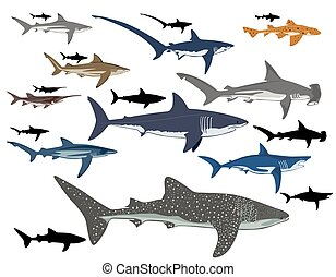 shark collage