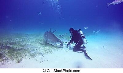 Shark diving in Bahamas. Pure blue water of Atlantic Ocean.