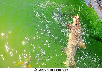 Shark encountering WA