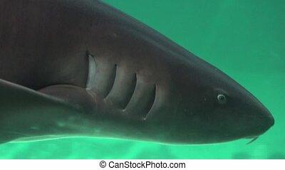Shark Gills And Sea Creatures