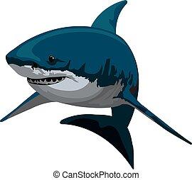 Shark, illustration - Shark, Blue and Gray, vector...
