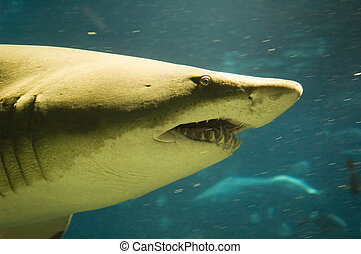 Shark with motion blur behind