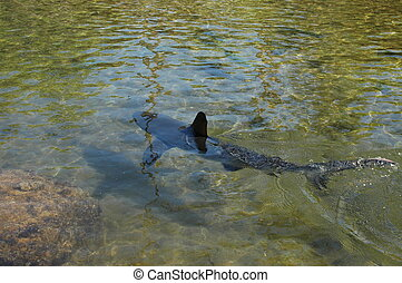 shark in shallow water