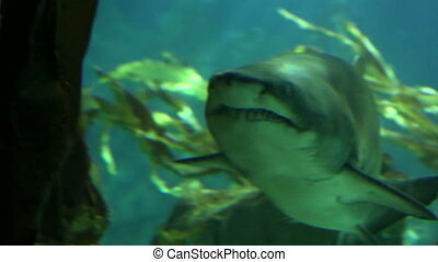 Shark in underwater wild life