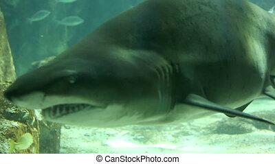Shark in underwater wild life