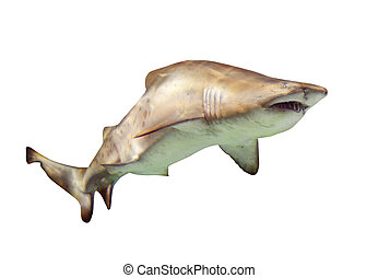 shark., isolato, sopra, bianco