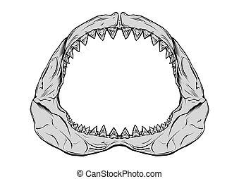 Shark jaw isolated on white