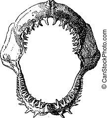 Shark jaw, vintage engraving. - Shark jaw, vintage engraved...