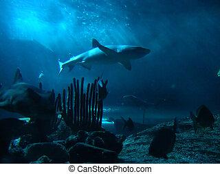 Shark on the Prowl