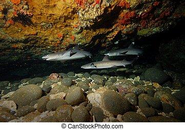 shark reef and coral reef diving underwater