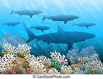 Shark shoal - Shoal of sharks swimming over coral seabed....