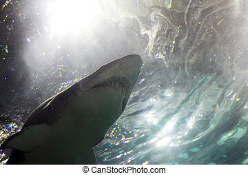 Shark - A shark is swimming in the deep water