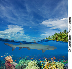 Half underwater image with shark, corals, and palms on the island
