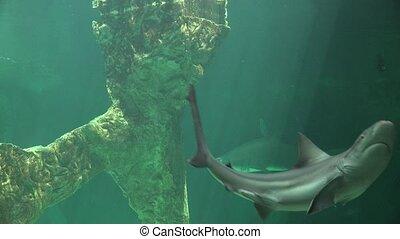 Shark Swimming And Marine Life