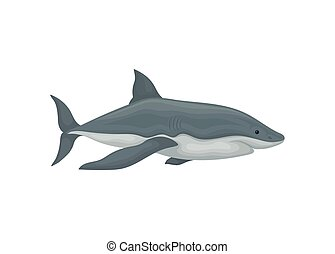 Shark swimming sea animal vector Illustration on a white background