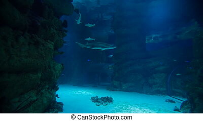 Shark swims underwater at Moscow oceanarium