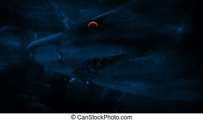 Shark Swims Past At Night With Glowing Eyes - Large shark...