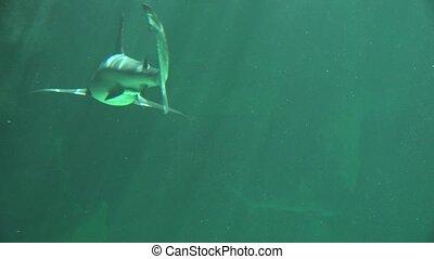 Shark Tails Swimming Underwater