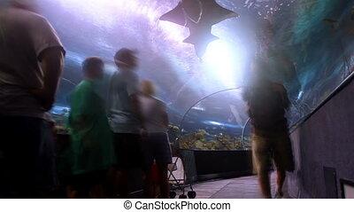 Shark Tank Time Lapse