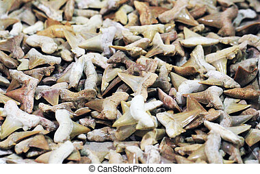 shark teeth fossil collection as dangerous background