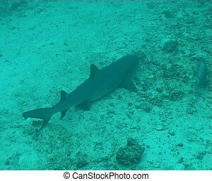 shark underwater diving video - underwater diving video