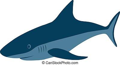 Shark, vector illustration