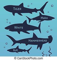 Shark vector silhouettes set. Sea fish, animal swimming, fauna illustration.