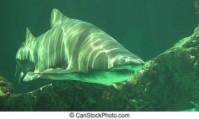 Sharks And Ocean Predators