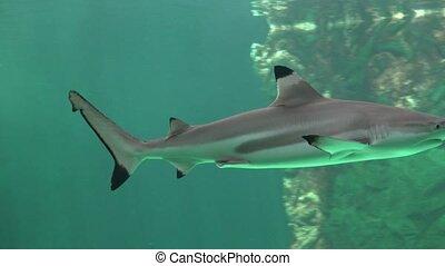 Sharks And Predators Of The Deep Ocean